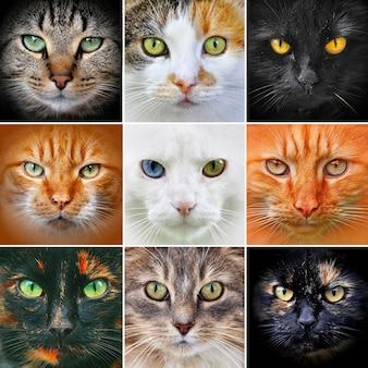 Portretten van kattenkoppen aan de voorkant kijken naar de camera