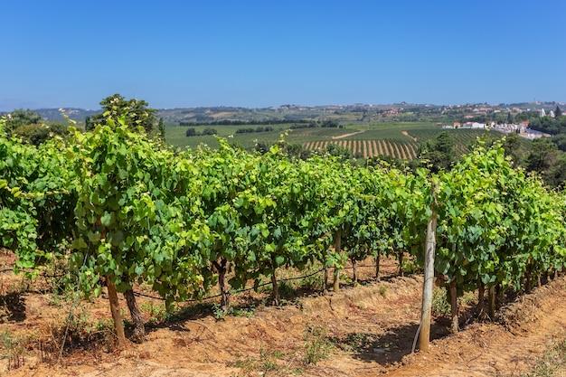 Portugese wijngaarden van de zone alentejo.