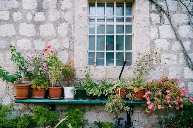 Posteleinbloem op een houten plank dichtbij de muur van een huis met een venster achter een metalen rooster.