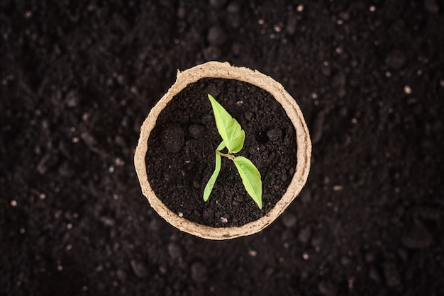 Pot met jonge plant op aarde