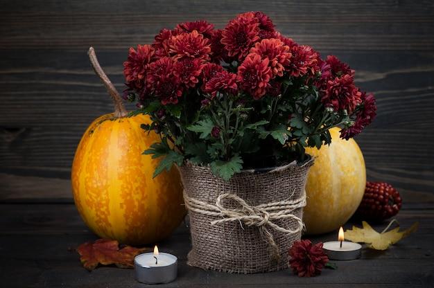 Pot met rode chrysant bloemen