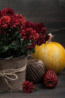 Pot met rode chrysantenbloemen
