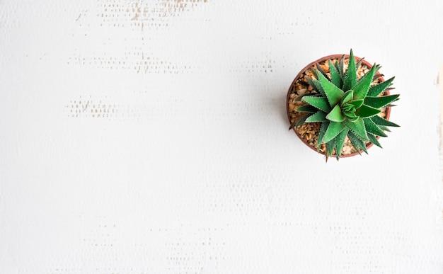 Potcactus op witte achtergrond