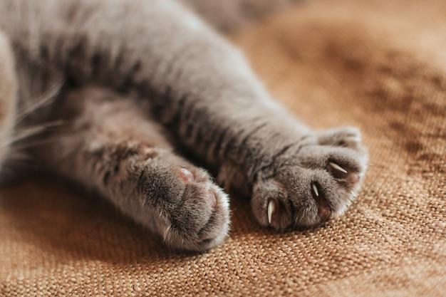 Poten van een grijze kat op een oude jute. de gelukkige kat toont zijn klauwen.