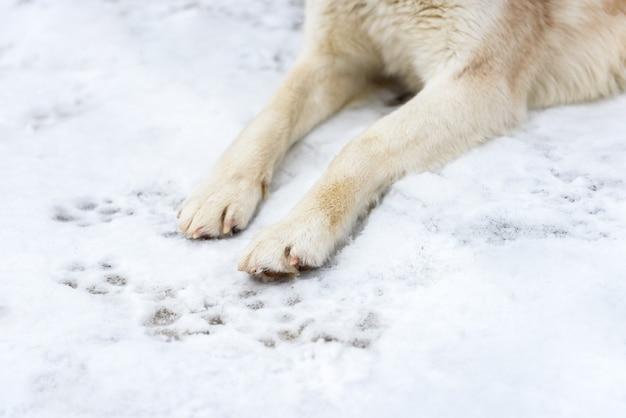 Poten van een hond op sneeuw