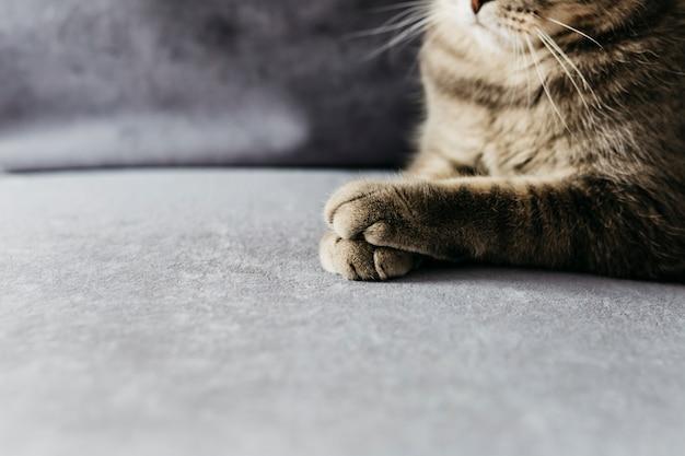Poten van grijze kat