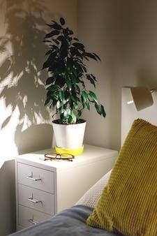 Potplant ficus benjamina in een gezellige slaapkamer op het nachtkastje 's avonds. fragment van nachtkastje, gele en blauwe kussens, lamp, witte muren. scandinavisch interieur, kamerplantconcept