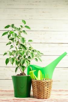 Potplant