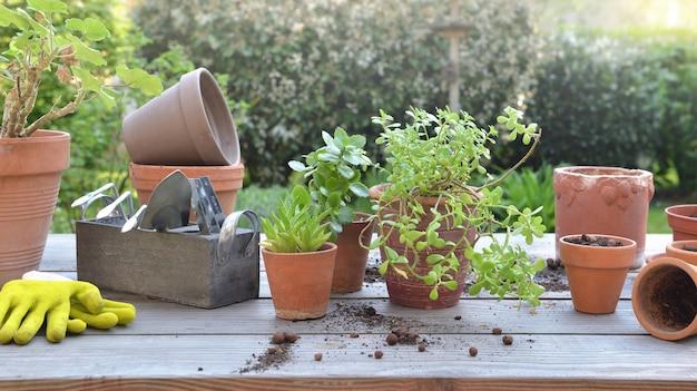 Potplanten en tuingereedschap op een tafel in een tuin