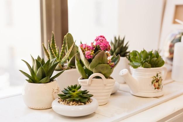 Potten met bloemen, vetplanten op het raam. de teelt van bloemen en decoratie