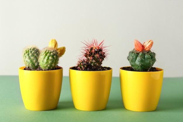 Potten met cactussen op tafel