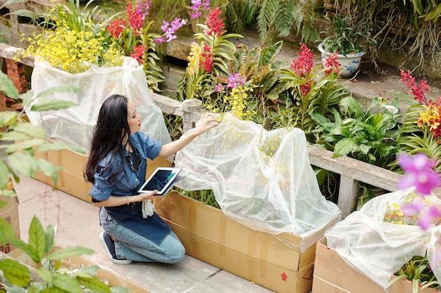 Ppetty jonge aziatische vrouw die in een kas werkt, controleert bloeiende bloemen bedekt met plasticfolie