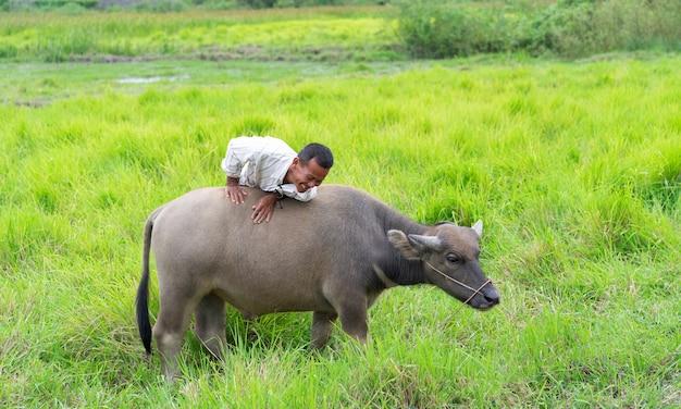 Prachinburi, thailand - 11 augustus 2019: thaise boer rijdt met zijn buffel op groen grasveld in platteland