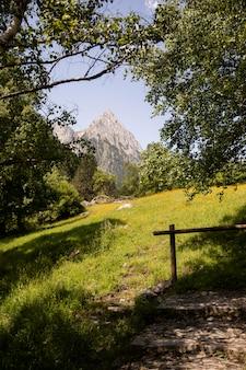 Prachtig bergboslandschap