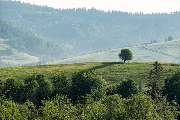 Prachtig berglandschap bij bewolkt weer. eenzame boom op een heuvel.