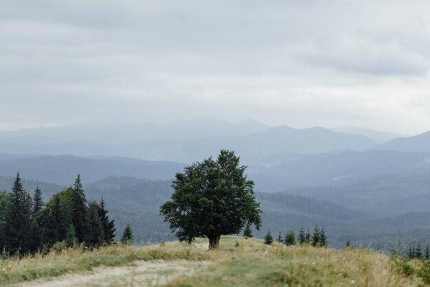 Prachtig berglandschap. eenzame oude eik op bergen.