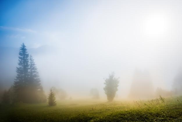 Prachtig betoverend landschap van een zeldzaam bos dat groeit op een heuvel bedekt met gras en dichte mist