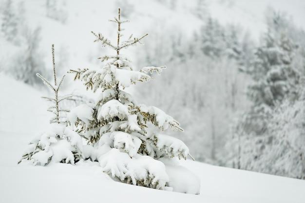 Prachtig betoverend ruig landschap van besneeuwde sparren die zich op sneeuwbanken en berghellingen bevinden