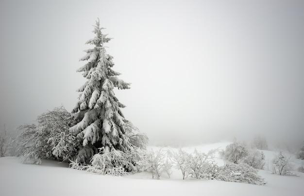 Prachtig betoverend ruig landschap van besneeuwde sparren