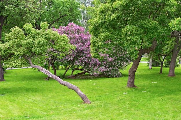 Prachtig bloeiende lila bomen en meidoorn. bomen bloeien in het voorjaar. bloeiende tuinboom.