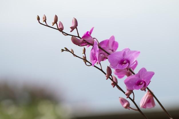 Prachtig bloeiende orchidee buitenbeeld