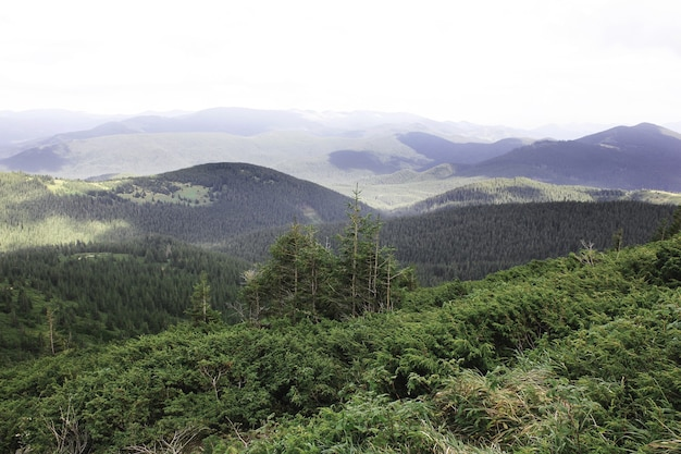 Prachtig bos en bergen