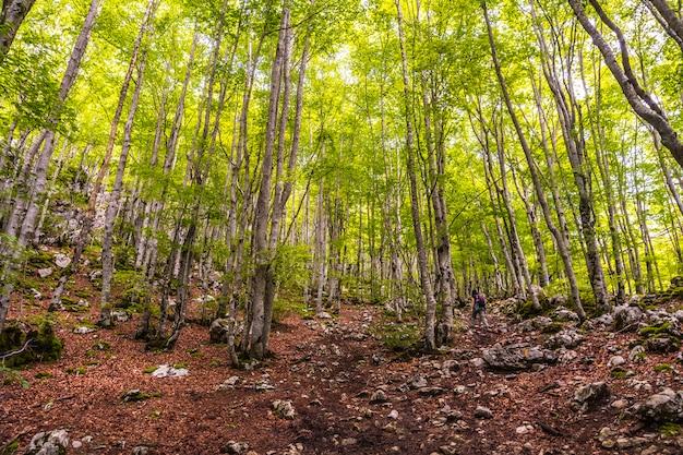 Prachtig bos in opkomst. mount aizkorri 1523 meter, de hoogste in guipuzcoa. baskenland. klim door san adrian en keer terug door de oltza-velden