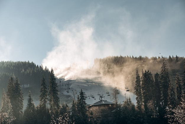 Prachtig dennenbos met een blauwe mistige lucht op de achtergrond. beboste berghelling met zonnig weer op de achtergrond. landschapsconcept
