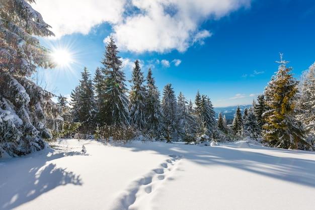 Prachtig en schilderachtig landschap van platgetreden winterpaden op een besneeuwde heuvel begroeid
