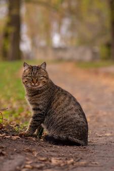 Prachtig gemarkeerde cyperse kat, zittend in het veld op herfstdag