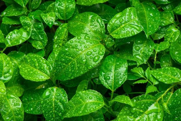 Prachtig groen blad met druppels water