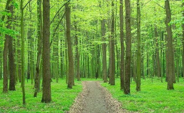 Prachtig groen bos in de lente