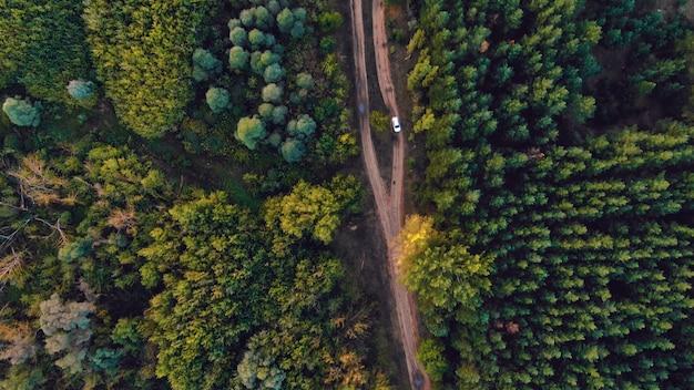Prachtig groen bos in een landelijk landschap