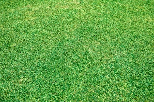 Prachtig groen gazon