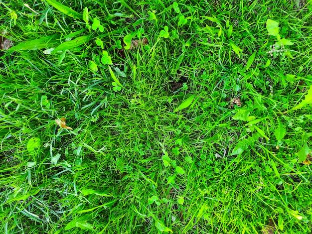 Prachtig groen gras en klaver achtergrond bovenaanzicht