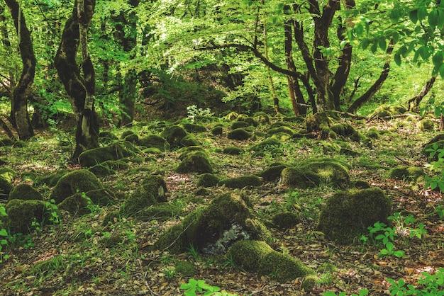 Prachtig groen loofboslandschap