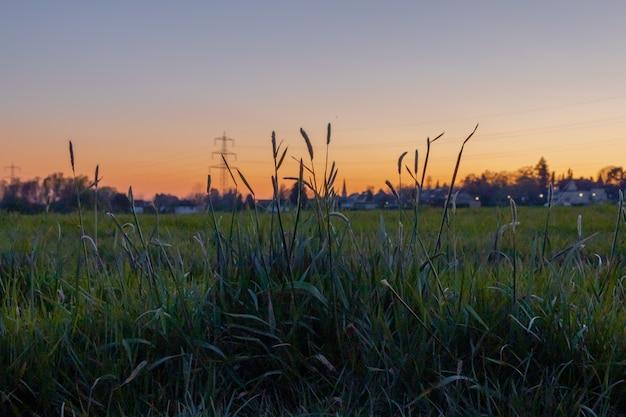 Prachtig groen veld met de zonsondergang op de achtergrond