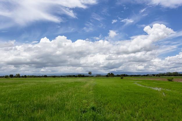 Prachtig groen veld met een blauwe lucht