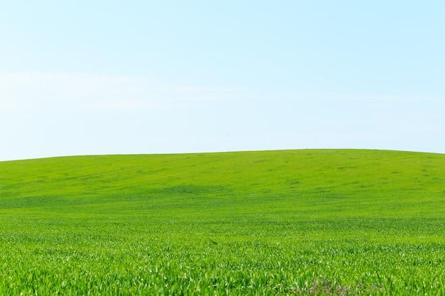 Prachtig groen veld
