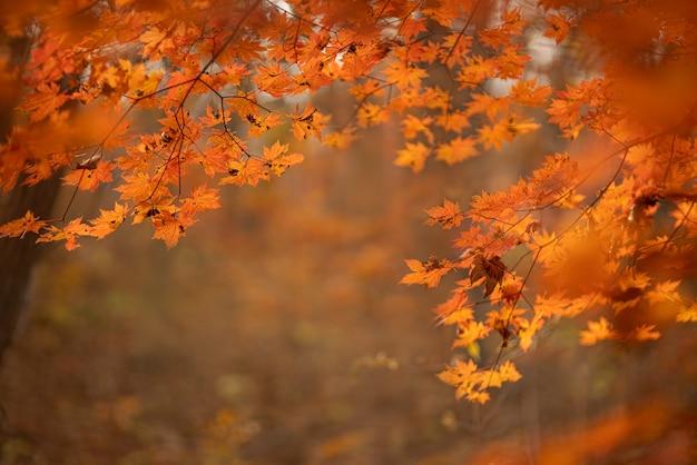Prachtig herfstlandschap met gevallen droge bladeren