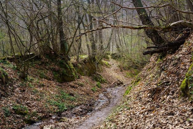 Prachtig herfstlandschap met kale boomtakken en een pad bedekt met bladeren met een beekje