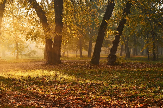 Prachtig herfstlandschap op een mistige ochtend met prachtige zonnestralen.