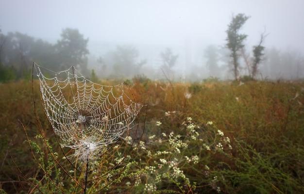 Prachtig herfstlandschap. spinneweb bedekt met druppels uit de vroege ochtendmist