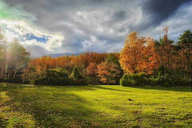 Prachtig herfstlandschap van een bos in felle kleuren op een zonnige dag