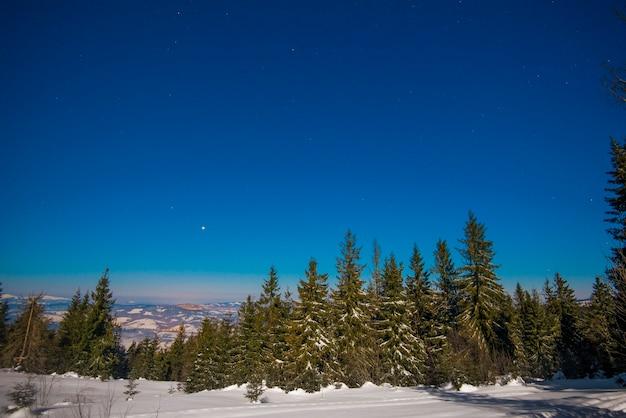 Prachtig landschap met majestueuze hoge dennenbomen die groeien tussen witte sneeuwlaag tegen de blauwe lucht op een zonnige ijzige winterdag
