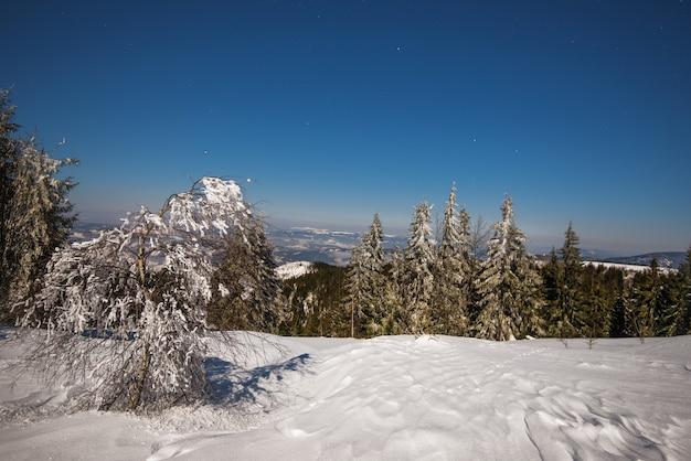 Prachtig landschap met majestueuze hoge sparren die groeien tussen witte sneeuwbanken tegen de blauwe lucht op een zonnige ijzige winterdag. concept van trekking en milieuvriendelijke vakantie. advertentie ruimte
