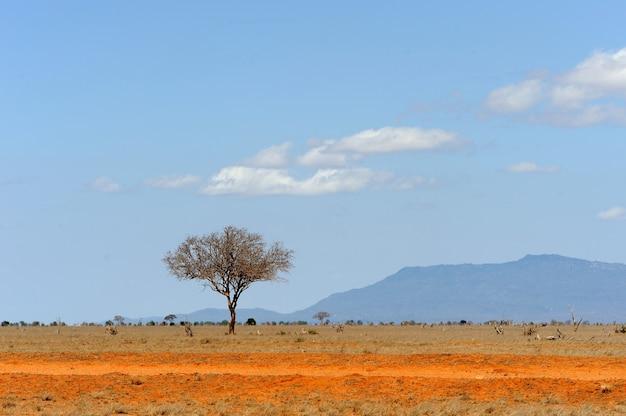 Prachtig landschap met niemandsboom in afrika