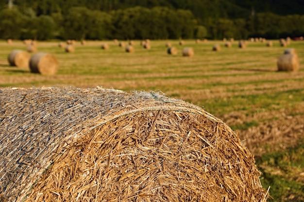 Prachtig landschap op het platteland. hooibalen in geoogste velden. tsjechische republiek - europa. agricultura