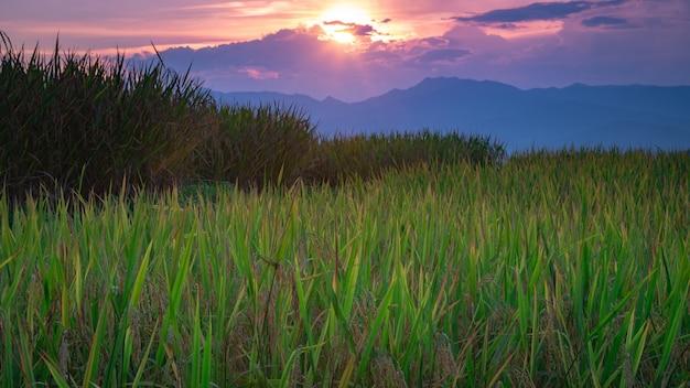 Prachtig landschap. padiegebieden bij het dorp van pa pong pieng, mae chaem, chiang mai, thailand.