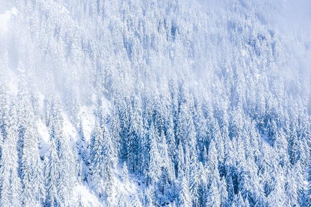 Prachtig landschap van een bos met veel bomen in de winter in de zwitserse alpen, zwitserland